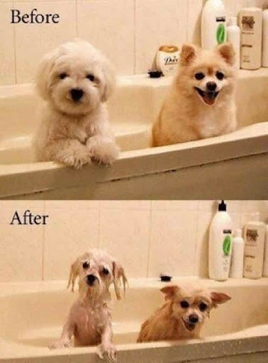 before and after LOL