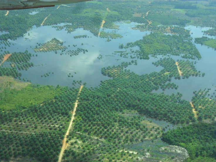Sungai yang tercemar limbah perkebunan kelapa sawit, lokasi Belitang, Kalbar, Indonesia