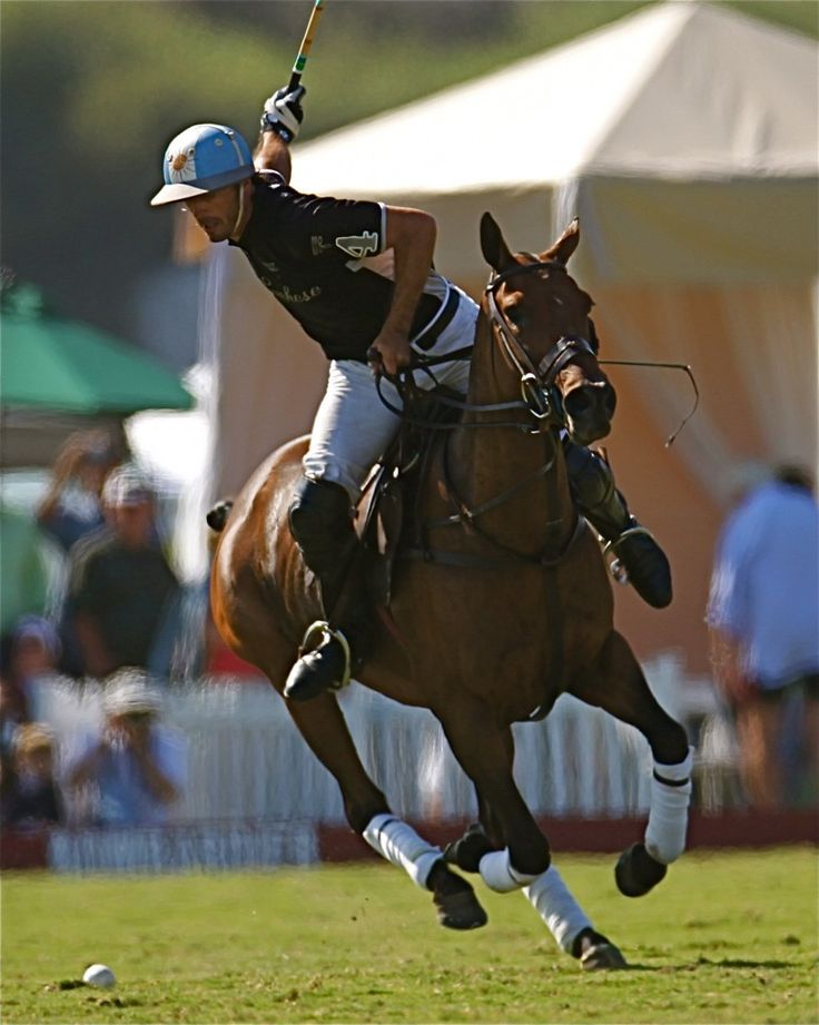 an introduction to the sport of polo a polo match A basic introduction about the sport of polo, its history, general regulations,  concepts, and characteristics are presented here the history of the game: the  ball.
