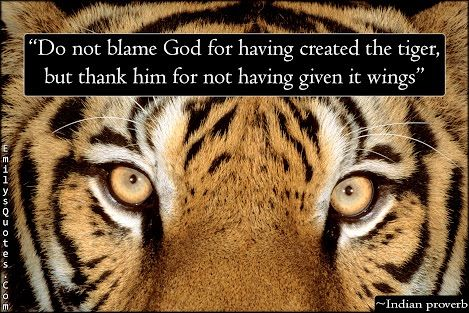 """""""Do not blame God for having created the tiger, but thank him for not having given it wings. (Indian Proverb) - Unknown """" -  Before you complain about the things you don't have, be grateful for what you do. Chances are you have more than you think."""