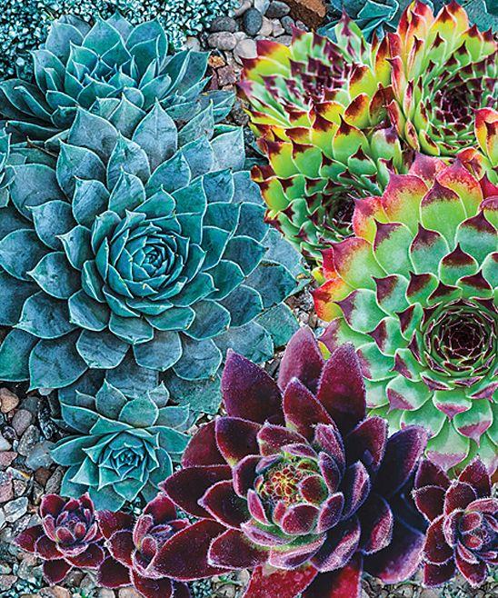 succulents!