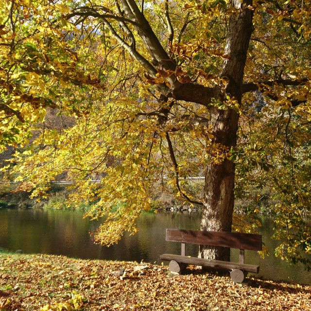 'Autumn rest ' on Picfair.com