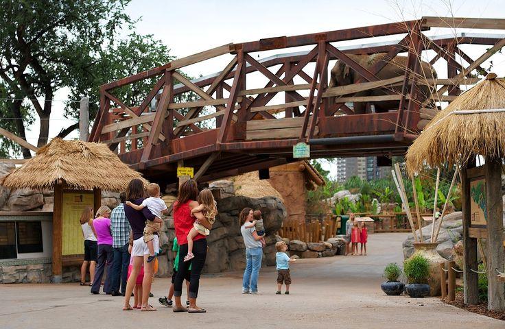 Elephants Overhead | A bridge at Denver Zoo's Toyota Elephant Passage exhibit lets elephants, rhinos...