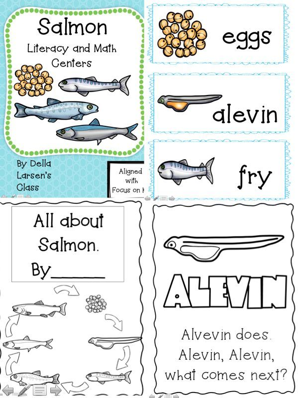 Salmon life cycle. Kindergarten life cycle coloring book. Salmon life cycle word wall vocabulary cards