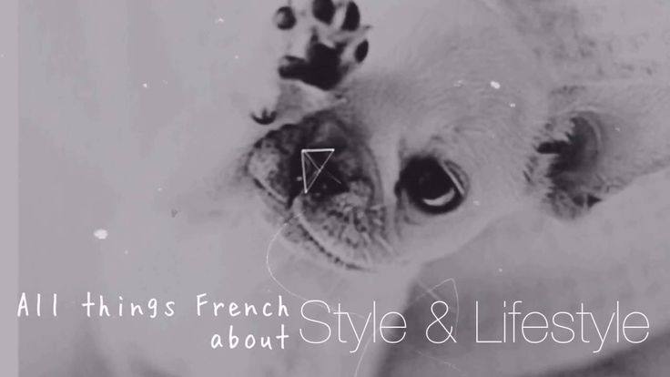 Fren'Chic touch introduction by Frenchies