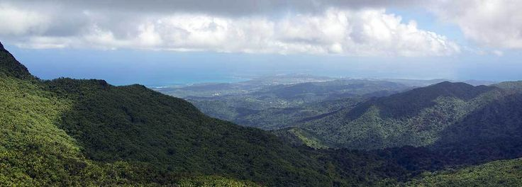 Best Hiking Trail (to the TOP) El Yunque National Forest