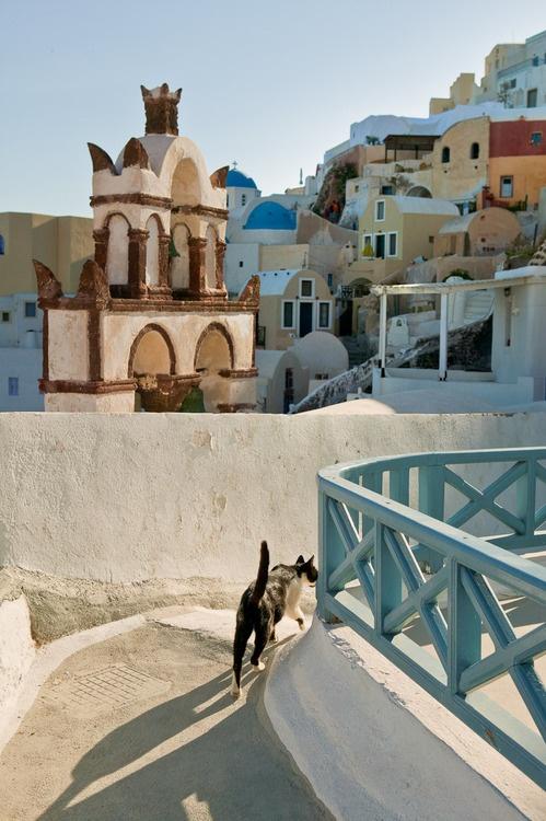 b-alchik: nikosgreece: Santorini,Greece eastern cats make me life lololol