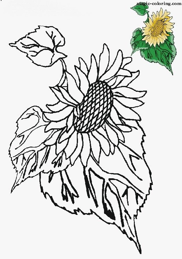 sunflower coloring pages craft - photo#37