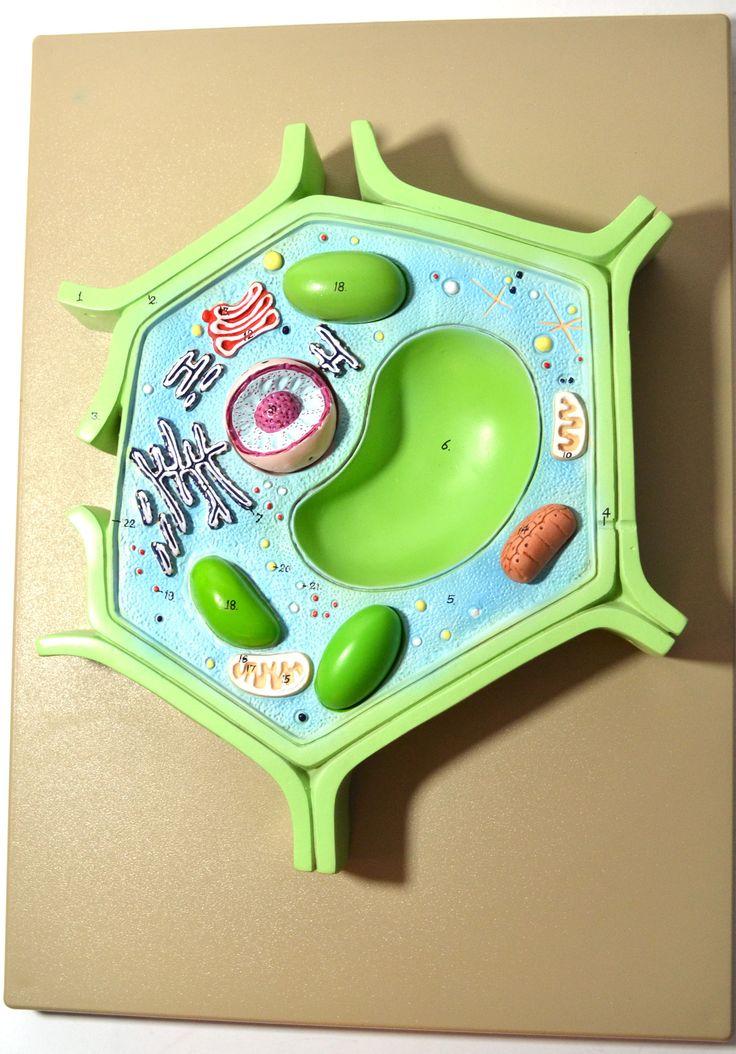 7 Best Biology Plant Cell Model Images On Pinterest School