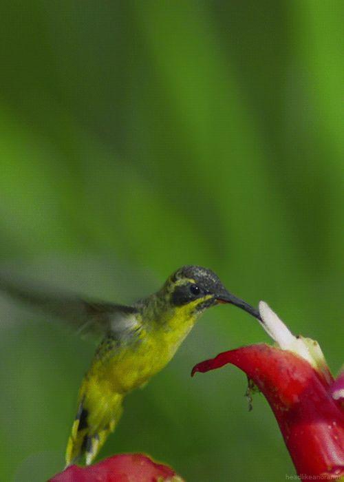 Essas 11 fotos de beija-flores são uma das coisas mais belas que você verá hoje