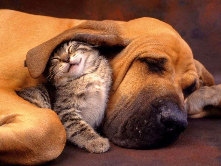22 best dog images on pinterest texts animation and boas cut kitten and hound dog funny pet picture check out this pet picture and have a great laugh cut kitten and hound dog online picture is adorable fandeluxe Image collections
