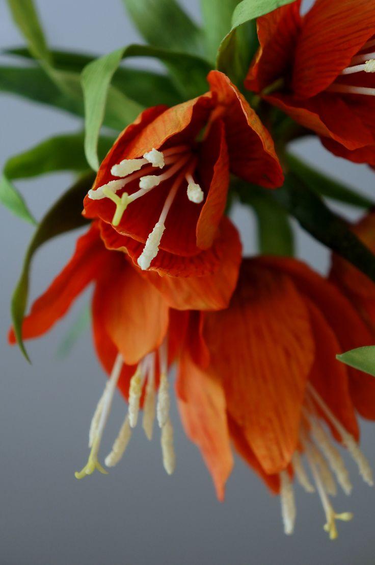 fritillaria imperialis orange cold porcelain
