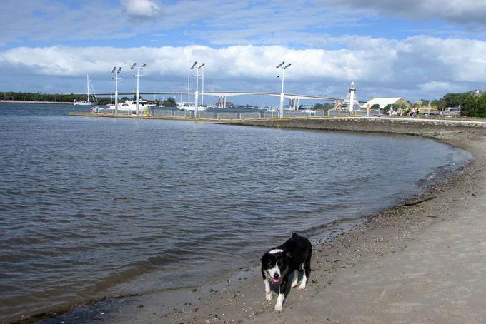 Colmslie Recreation Reserve Off Leash Dog Park Beach Morningside   Must do Brisbane