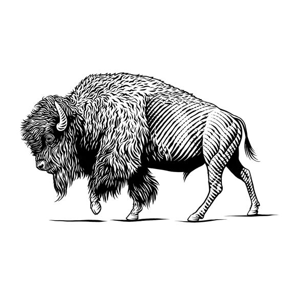 Pen & Ink Illustrations- Animals - KeithWitmer.com