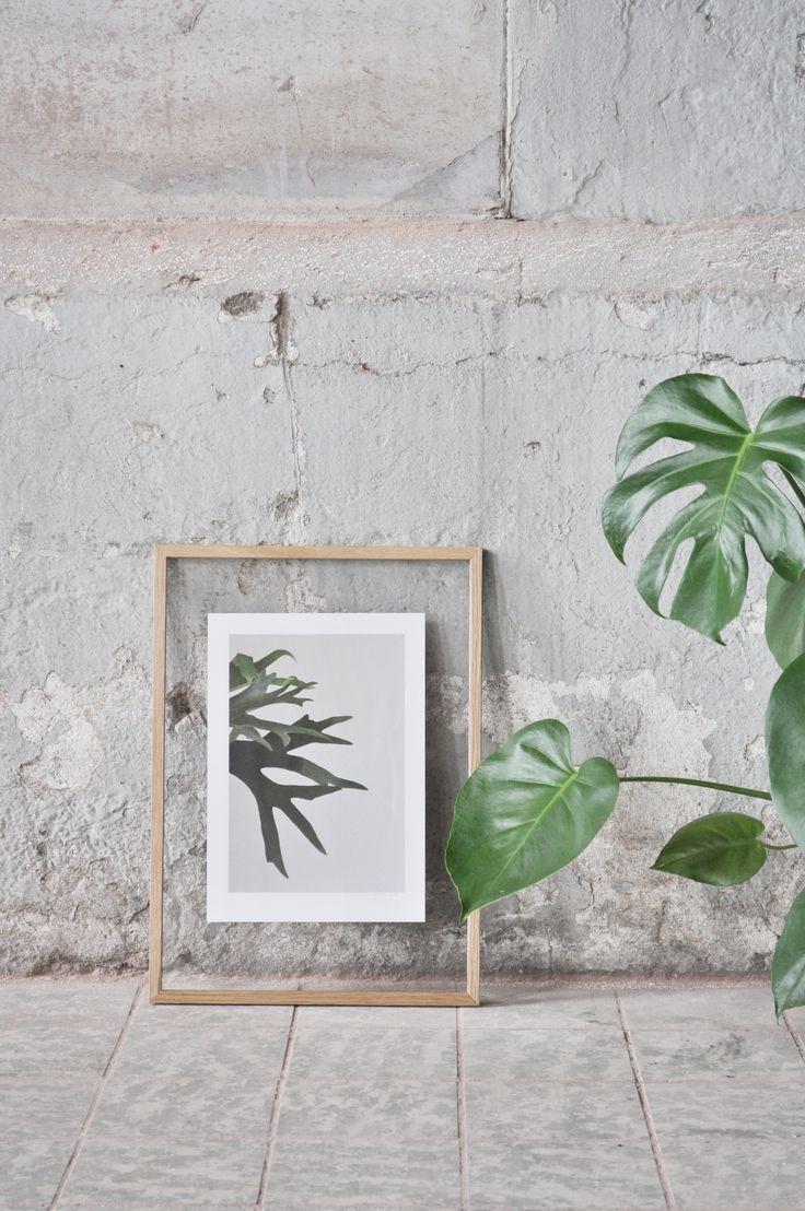 www.studiojoop.nl concept | photography | design | styling studio based in the Netherlands. Specialized in botanical artwork. www.studiojoop.nl mail: hallo@studiojoop.nl www.facebook.com/studiojoop © studio joop