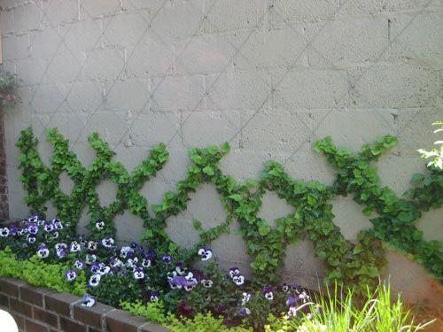 ivy trellis: Gardens Ideas, Courtyards Gardens, Backyard Ideas, Garage Wall, Gardens Patio Landscape, Gardens Yard, House, Backyard Gardens, Gardens Outdoor
