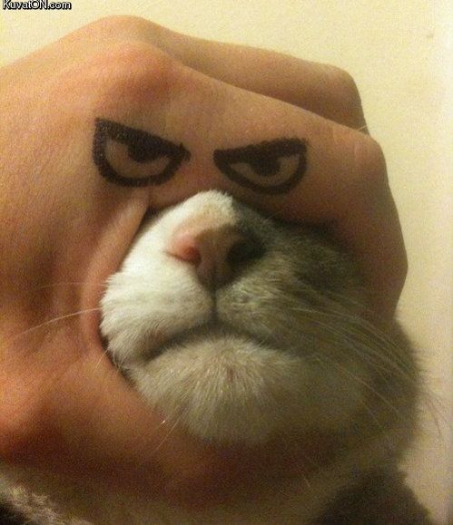Angry cat!  Too funny!!