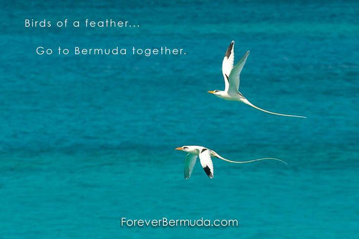 Birds of the Caribbean: Birding Guide to Bermuda, Aruba ...