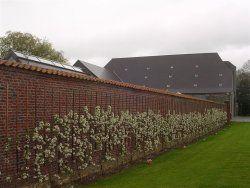 140 best gardening cordons espaliers and fans images on pinterest. Black Bedroom Furniture Sets. Home Design Ideas