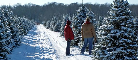 51 Best NC Choose & Cut Christmas Trees Images On