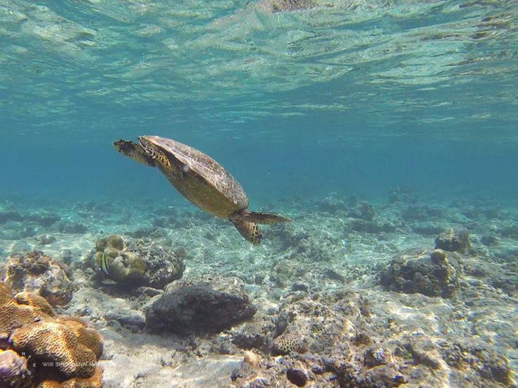 Snorkeling with Turtles, Gili Trawangan, Indonesia. http://www.wir-sind-dann-mal-weg.com/die-gili-inseln-indonesien-3/