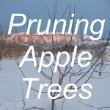 Pruning Apple Trees  You should be pruning apple trees in the late winter or early spring.
