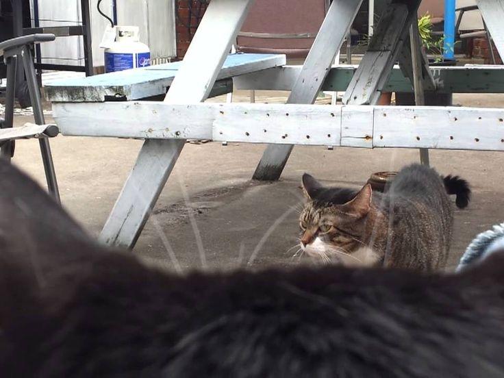 Bizarre (but cute) cat video
