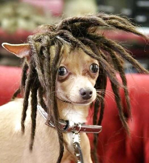 Even non-humans gotta consider how dreads impact their lives