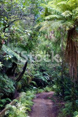 Pathscape, New Zealand Royalty Free Stock Photo