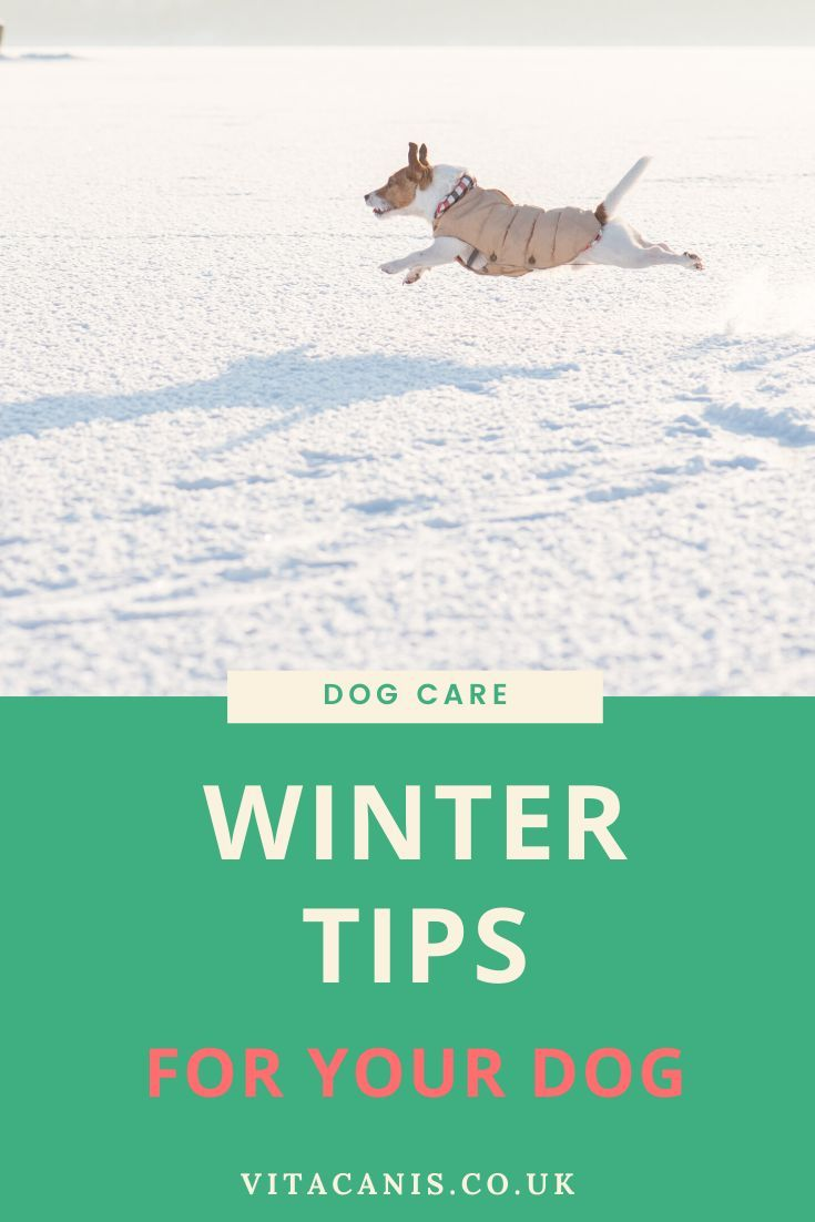 Keep Calm And Keep Walking Vita Canis Vita Canis Dog Care