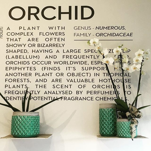 Were loving our display of White Phalaonopsis #Orchids in our flowershop #lamberdebie #wedding #destinationwedding