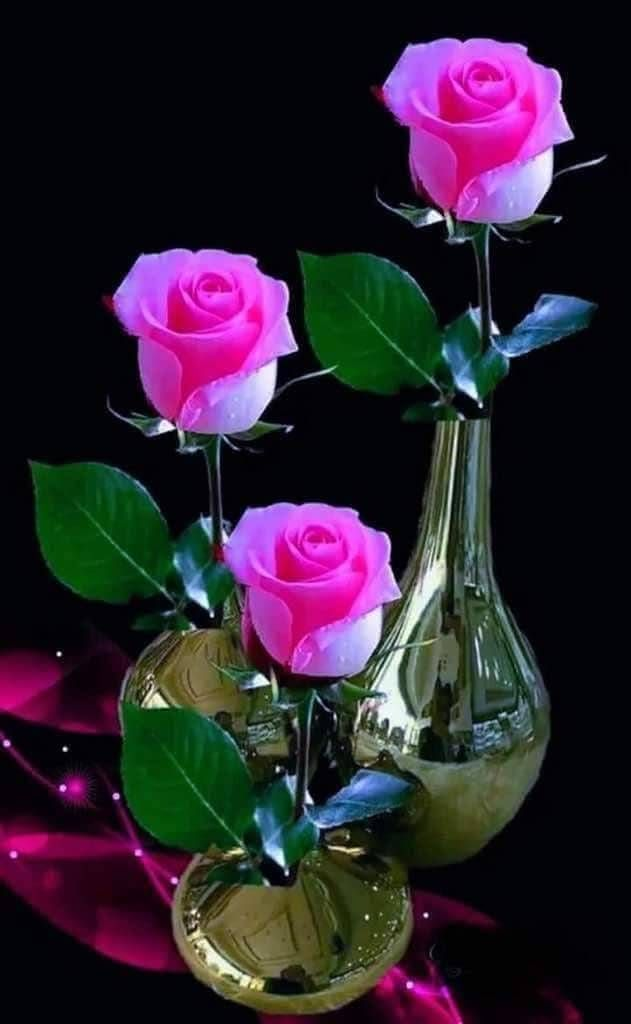 MOMENTS | A touch of color | Good morning flowers rose, Good morning flowers, Morning flowers