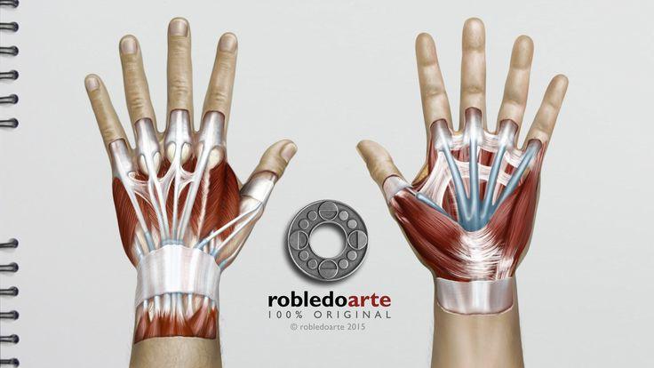 73 best Como dibujar músculos images on Pinterest | Anatomía humana ...