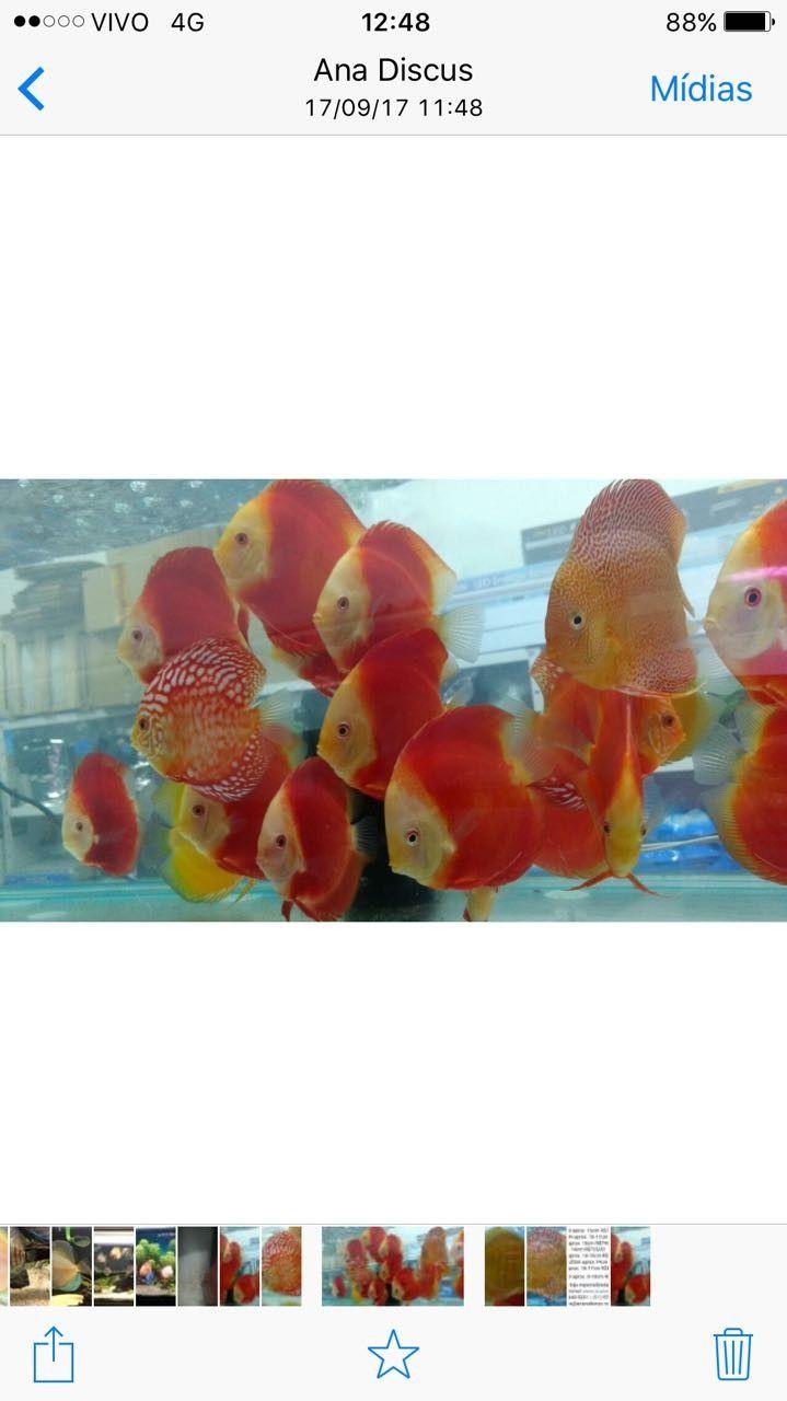 13 best DRK Peixes Ornamentais images on Pinterest | Aquariums, Fish ...