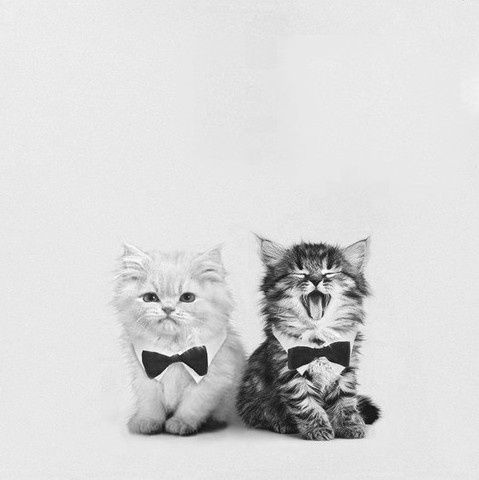 Use of cute little dicky bows on these two kittens | #Kittens #Cat #Dicky #Bow #Tie #Friends #Photography #PetPhotography #Outfit
