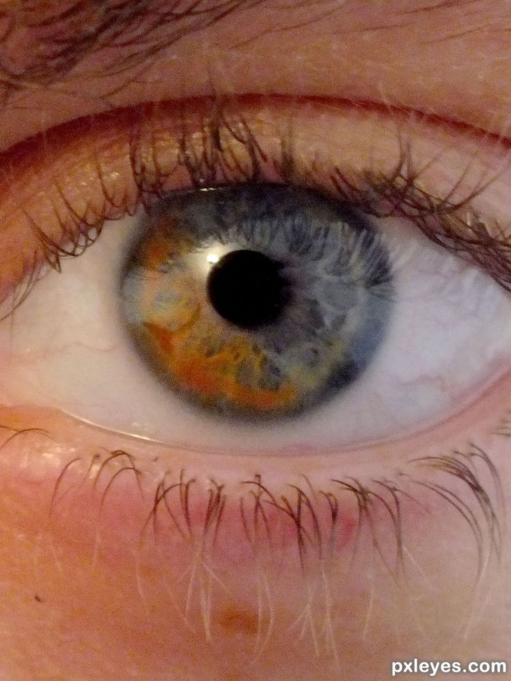 17 Best images about HETEROCHROMIA on Pinterest ...