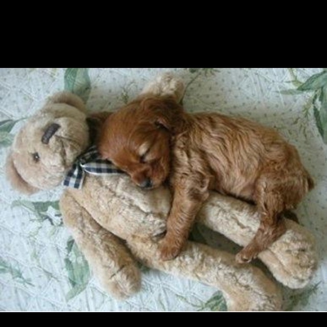 So sweet! Nobody will love you more than a dog will:)