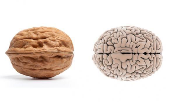 Avez-vous déjà remarqué que la noix ressemble aucerveau et qu'un grain de haricot ressemble à un rein? Cette similitude montre ce que peutguérir exactement un certain fruit dans le corps humain. Appéciezle lien incroyable entre le corps humain et la nature. La tomate est similaire avec le cœur, car elle est de couleur rouge et …