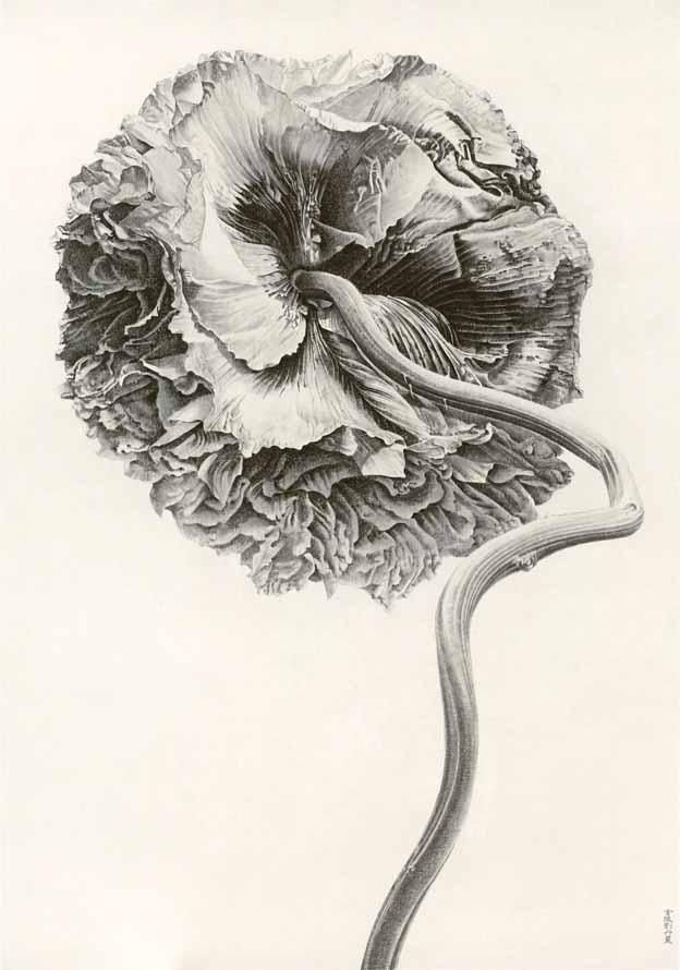 Liu Dan(Chinese, b. 1953)  Poppy, yingsu hua   2007  ink on paper