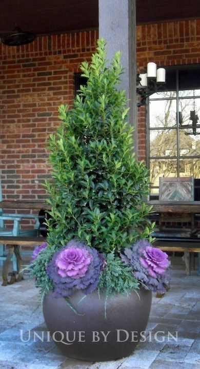 17 Best Images About Winter Container Ideas On Pinterest