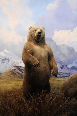 """"""" Big Bear, Big Bear follow me."""""""