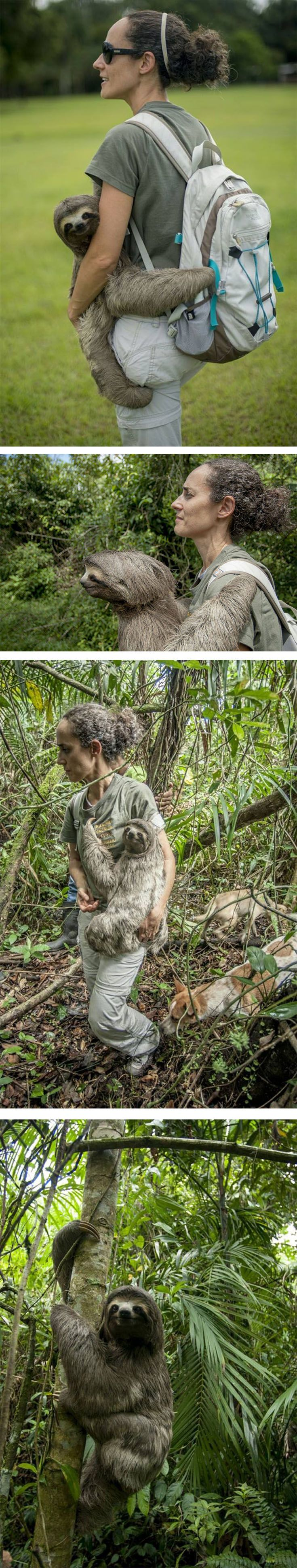 It's said that a picture is worth a thousand words — but some photos, like these showing a lost sloth being returned to freedom, speak volumes on their own.