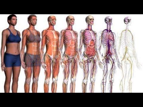 Тайны человеческого тела. Из чего действительно состоит Человек
