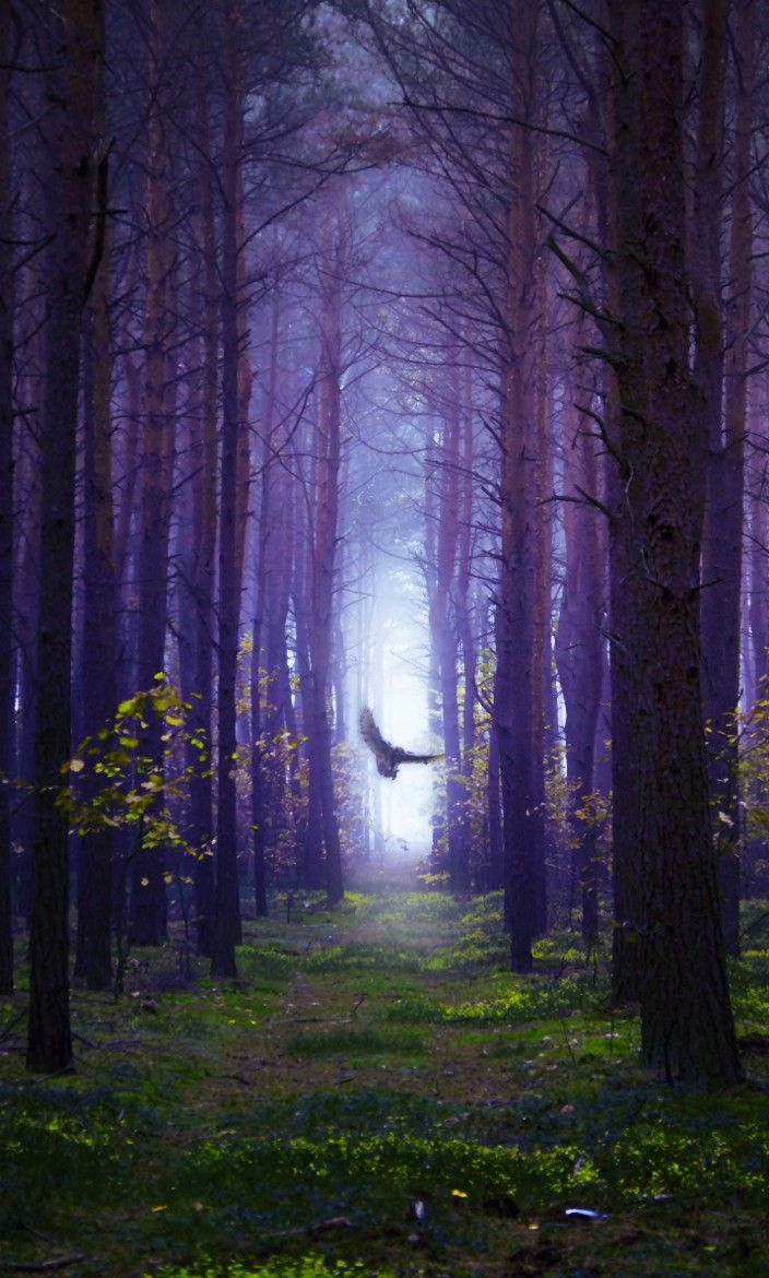 Photograph The Ghost in the Woods by Nikita Gill on 500px
