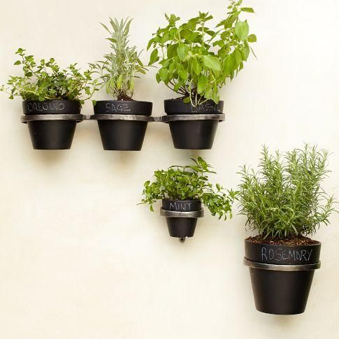Plants And Plants Pots For Urban Patio Gardens And