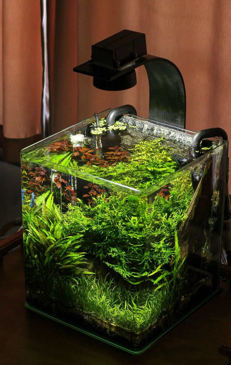 Great nano tank for a Betta (there's a Tiger Nerite snail too). Though I suggest lids on Betta tanks, they might jump... tank and setup by RobMc from plantedtank.net