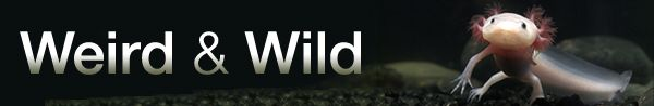 Wild Romance: Weird Animal Courtship and Mating Rituals