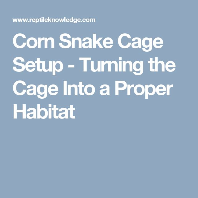 Corn Snake Cage Setup - Turning the Cage Into a Proper Habitat