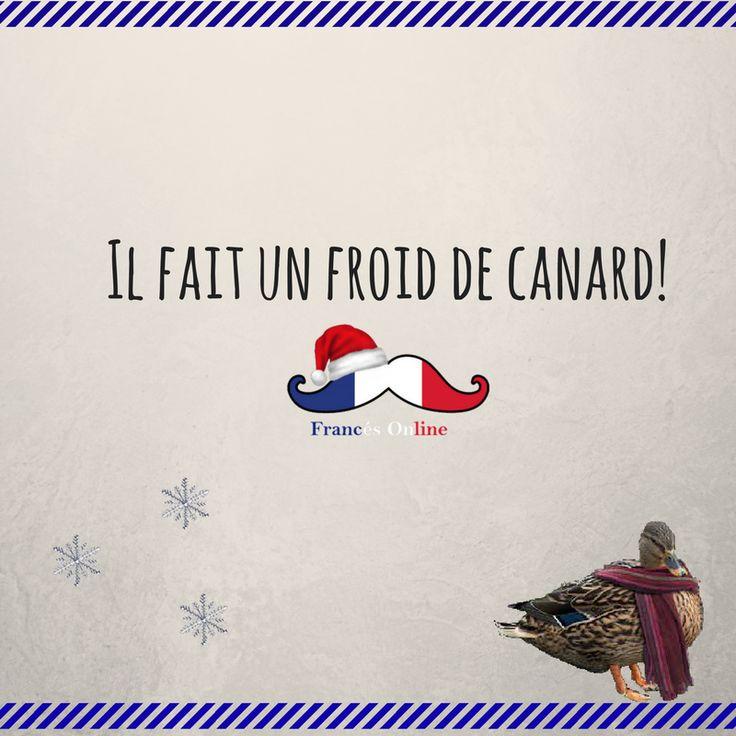"""Quand il fait très très froid, on dit qu'il fait un froid de canard ! """"Aujourd'hui à Paris, il fait un froid de canard !"""" - Cuando hace mucho mucho frio, decimos """"il fait un froid de canard"""" ! (Literalmente """"hace un frio de pato"""") """"Aujourd'hui à Paris, il fait un froid de canard !"""" - When it's really cold, we say that """"il fait un froid de canard"""" ! (Literally """"a duck's cold"""") """"Aujourd'hui à Paris, il fait un froid de canard !"""" - #Français #Francés #French #Idioma #Language #Idiomafrancés…"""