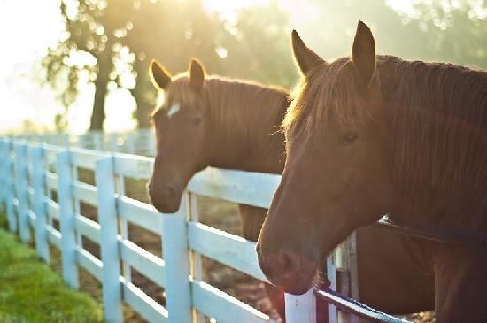 Kentucky Horse Park, Lexington. The only park of its kind in the world, the Kentucky Horse Park is a working horse farm, educational theme park and equine competition facility dedicated to man's relationship with the horse.